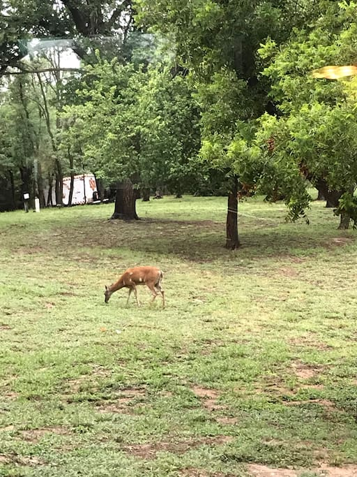 Back yard. Often deer and turkey.