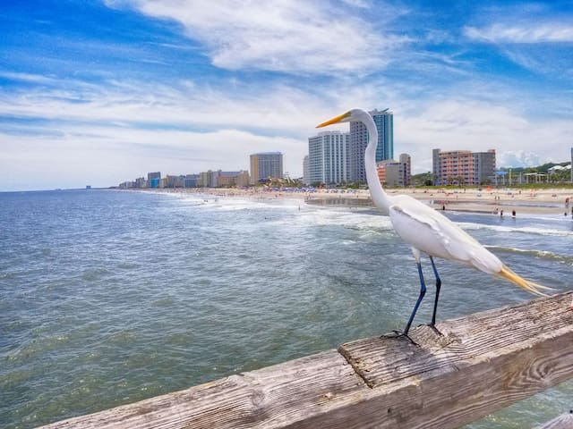 ⭐Direct Ocean Front! WOW Views! 15th Floor! Family