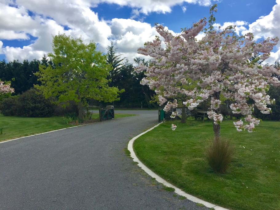 Spring blossom on the driveway entrance
