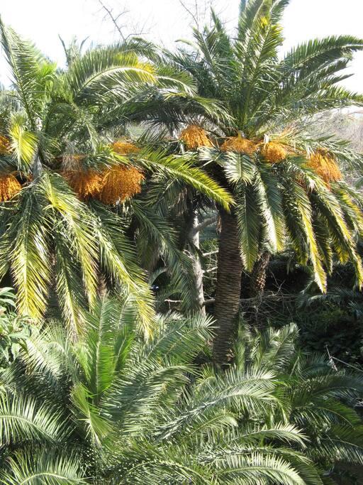 jardin NAUDIN