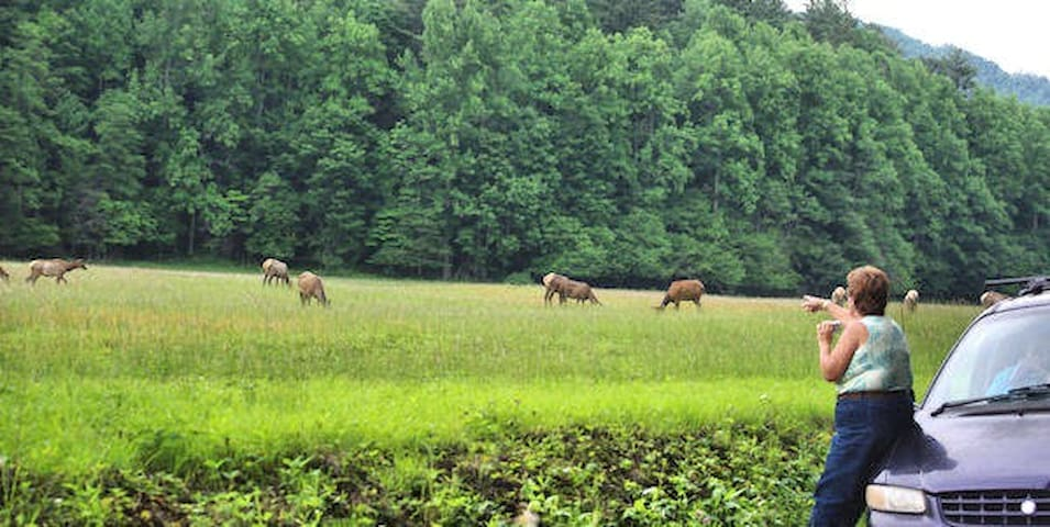 Elk were reintroduced back into the area