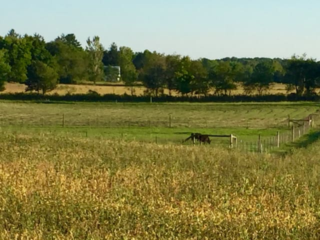 View of farmland and horses and cows to the south