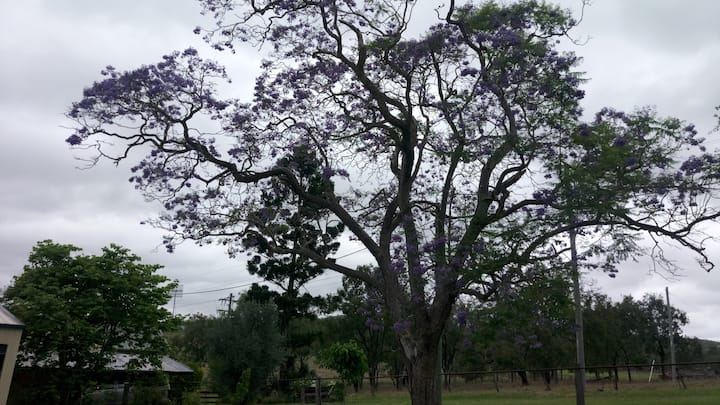 Mungungo Exchange