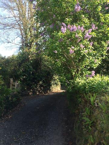 The lane to Primrose