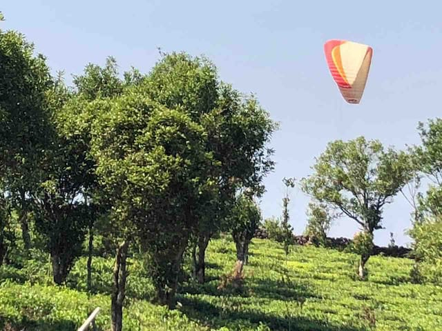 Paragliding in our plantation !! On request we can offer paragliding