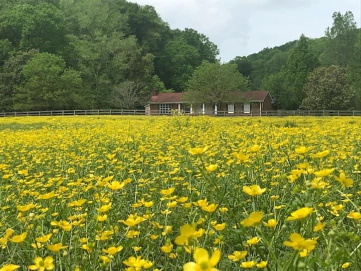 Fork Inn's Southern Hospitality Ranch, MasterBR