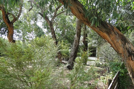 Upstream on the riverbank - Anglesea - House