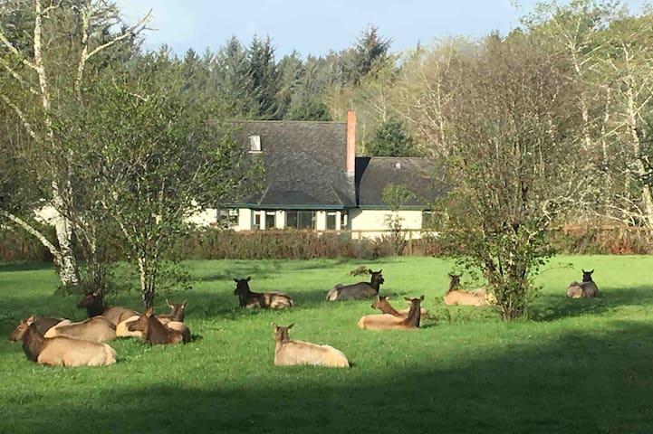 Elk herd relaxing in pasture outside your window.