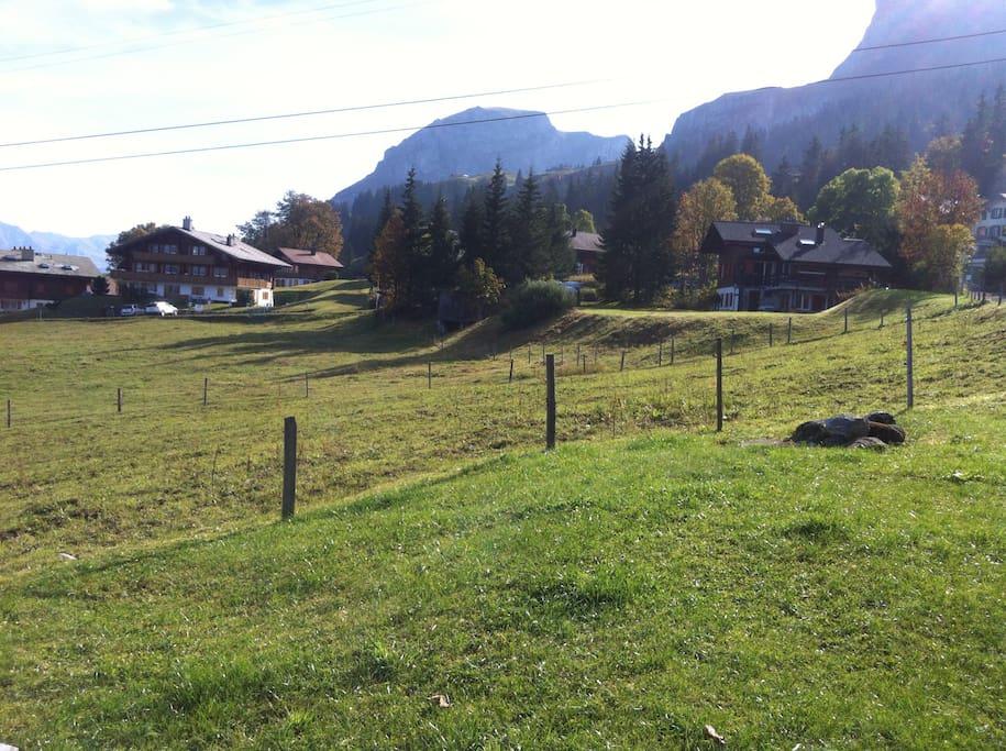 Im Sommer weiden die Kühe in der Nähe