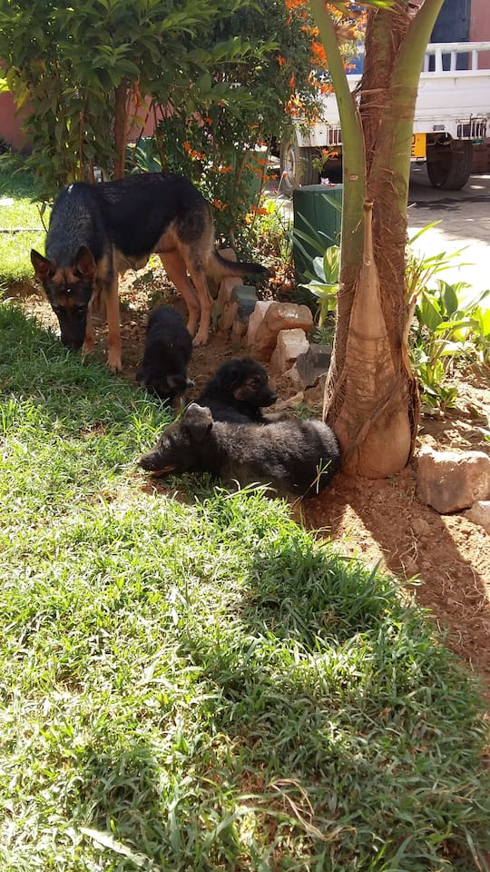 The home has adorable pets that can make pet lovers comforatable, we have cows, goats and sheeps too which live just along the other wall of the compound....a very comfortable place to relax and expose yourself to african normadic culture. Specifically masai culture.