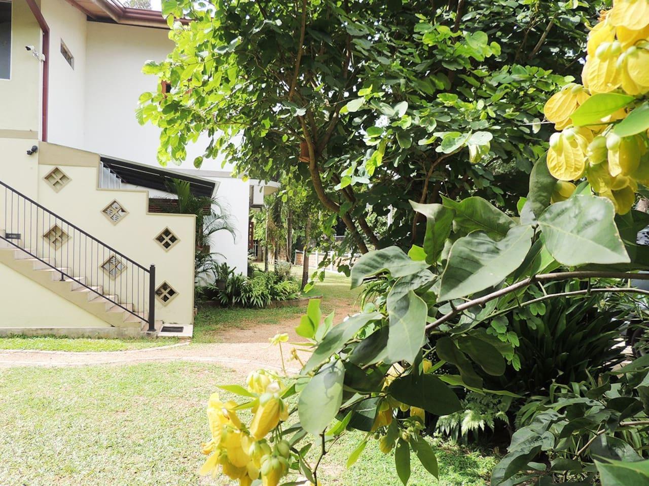 Entrance & Landscape