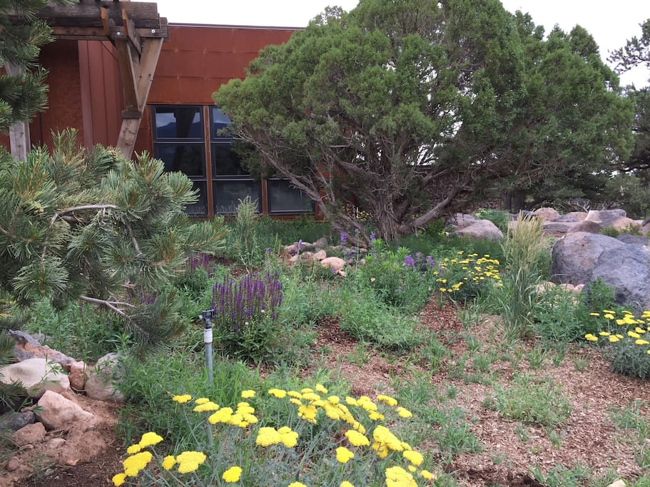 Desert gardens with native plants surround the home.