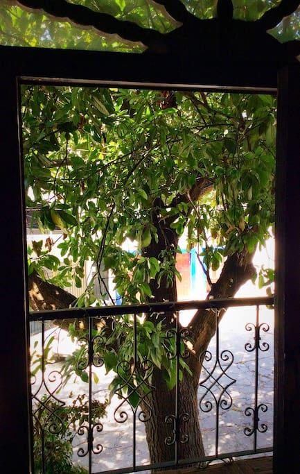 View of the room, an avocado tree!       Vista del cuarto, un árbol de aguacate!                 Vue de la chambre, un avocat!