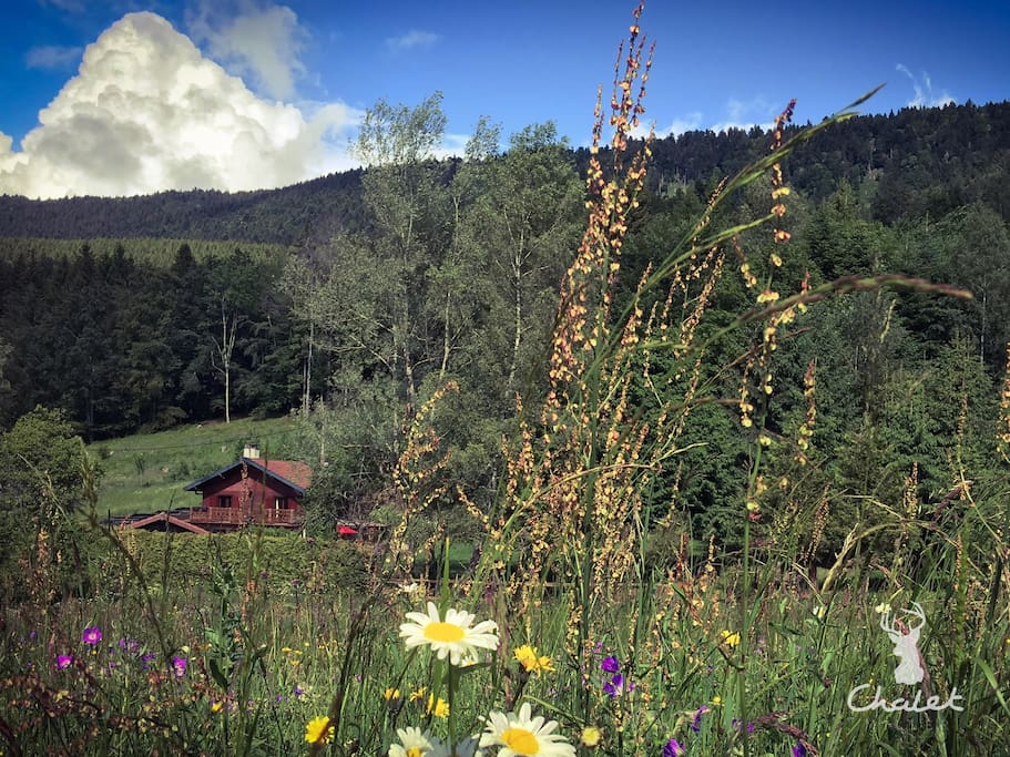 Wild flower meadow with views of the Voirons Mountains