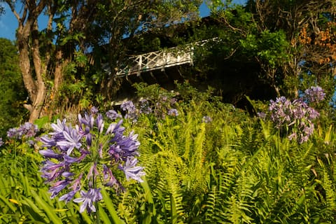 Coffee Farm Cottage in Blue Mountains, Jamaica