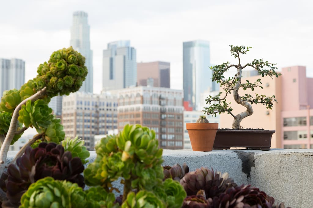 Rooftop Garden featuring thousands of plants from around the world