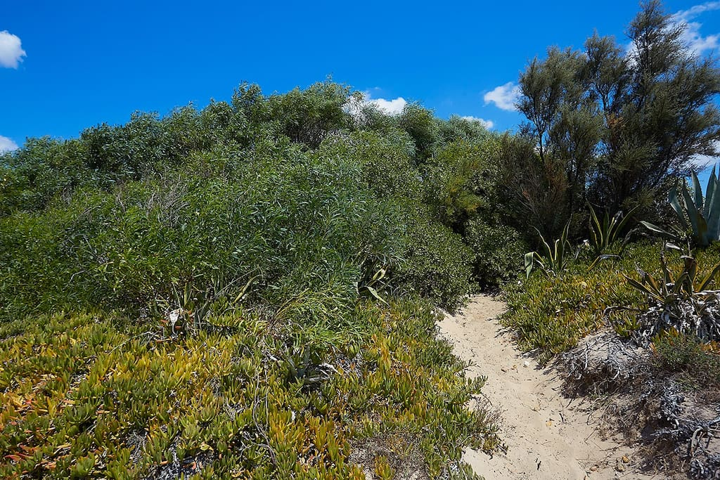 Sandy path to the beach