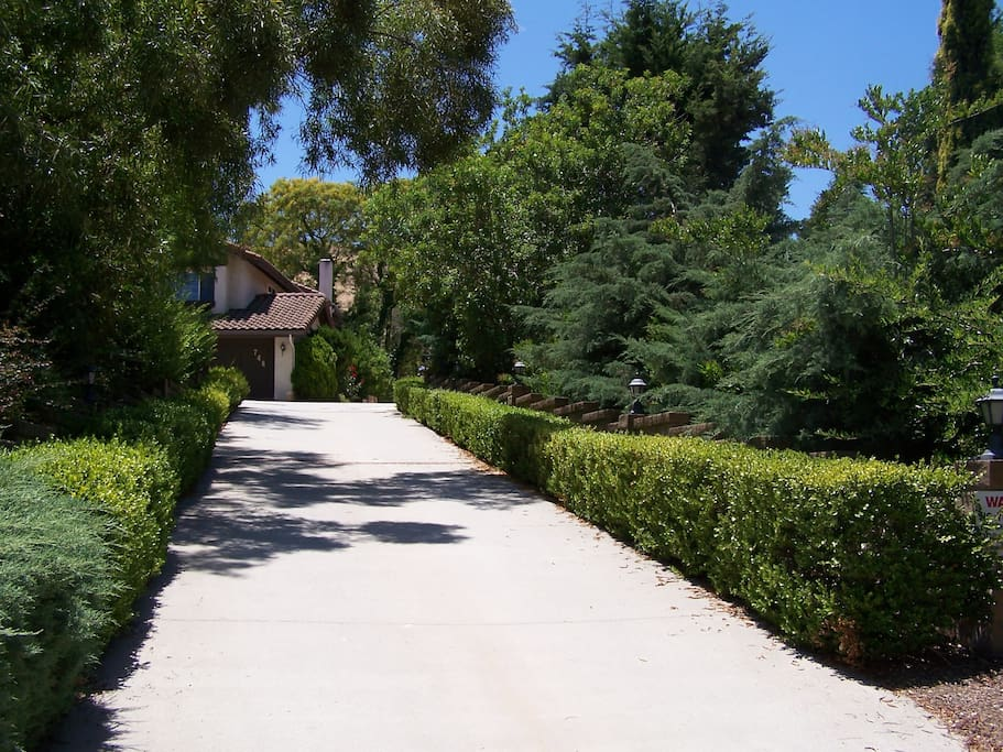 Drive Way Leading to a Hill Top