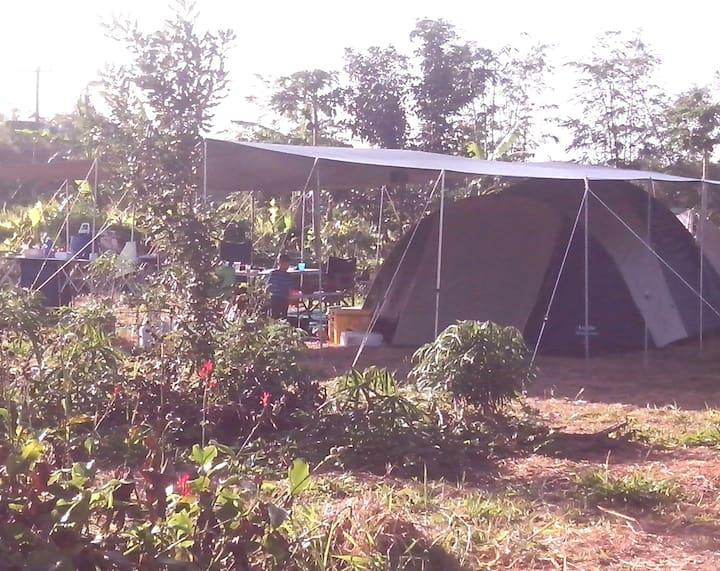 Hill Top Farm Camping