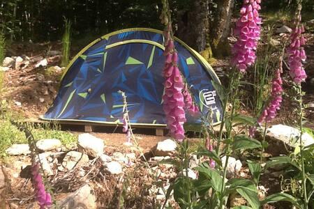 Camping dans la foret de Vizzavona - Vivario