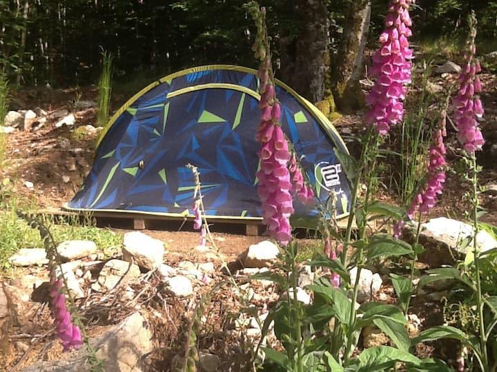 Camping dans la foret de Vizzavona