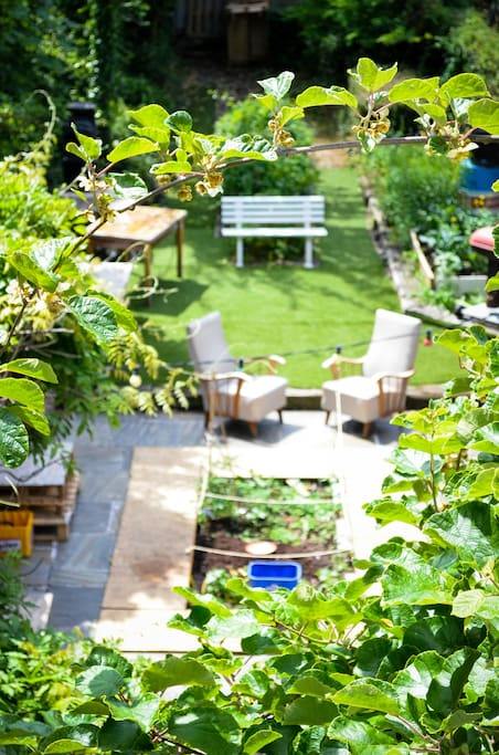 The infamous garden