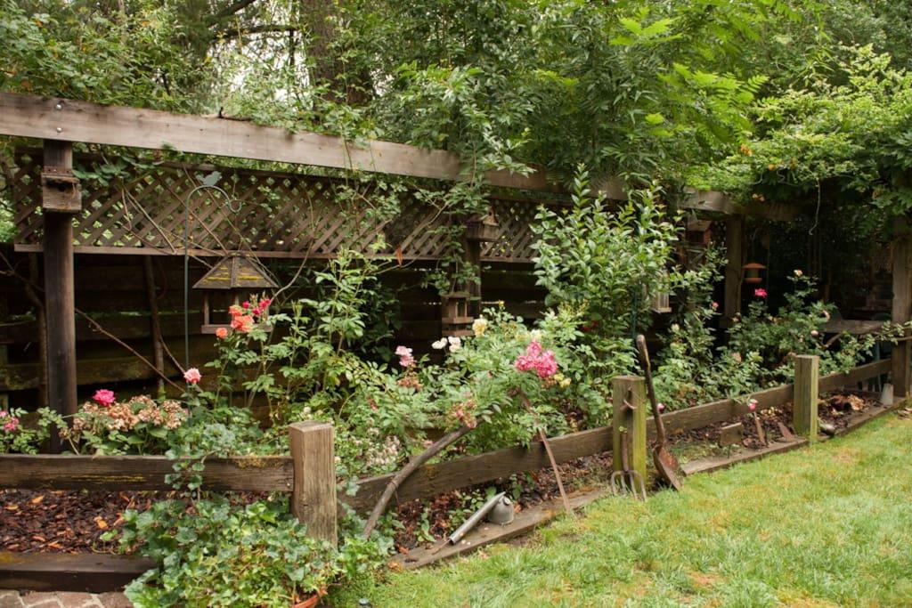 Manicured Rose Garden