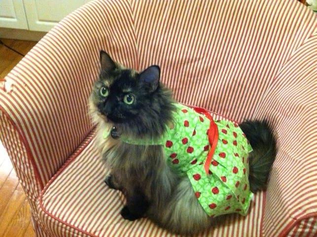 Comfy apartment, adorable cat! - New York