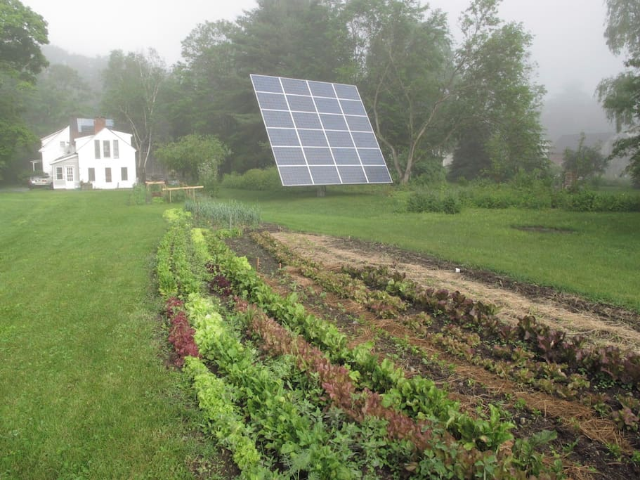 organic garden for grazing, solar tracker for energy
