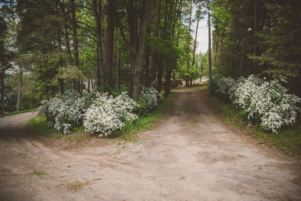 Entrance to the property in June (Spirea is blooming)