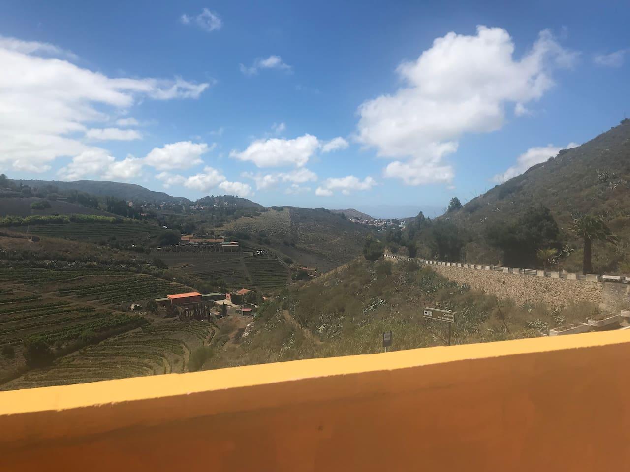 Vistas a los viñedos desde la Terraza .