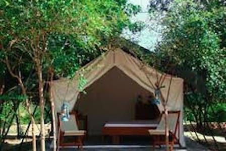 Camping at Yala National Park - Tissamaharama - Tent - 2