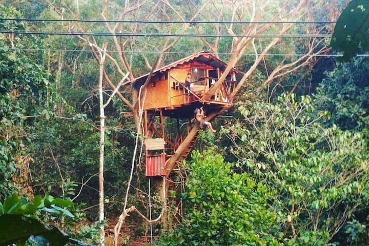 Devadaru Tree House in a lush Organic Farm