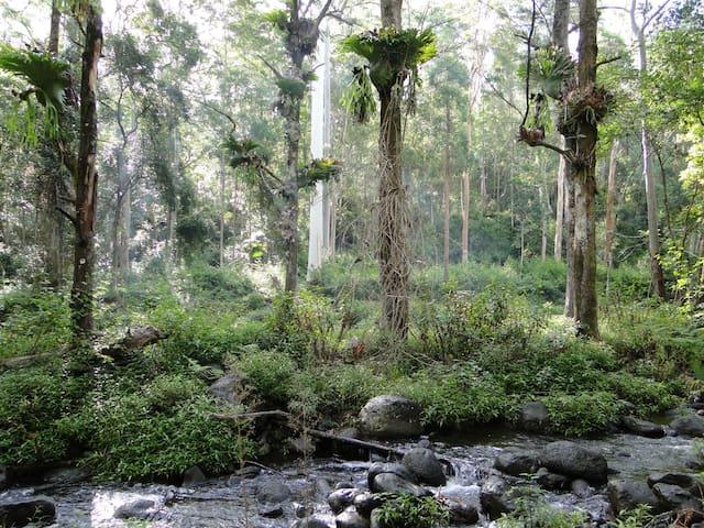 Stunning rainforest retreat in NNSW