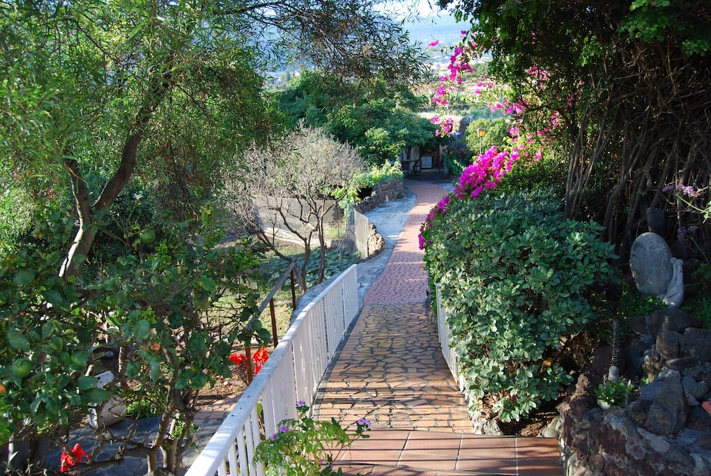 View of the path from the main house towards the guest house and the parking.