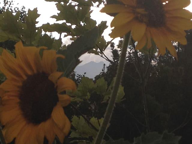 Longmont Mountain View Retreat Queen