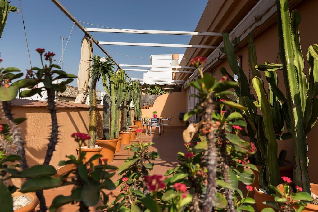 la maison cactus salle priv e appartements louer s ville andalousie espagne. Black Bedroom Furniture Sets. Home Design Ideas