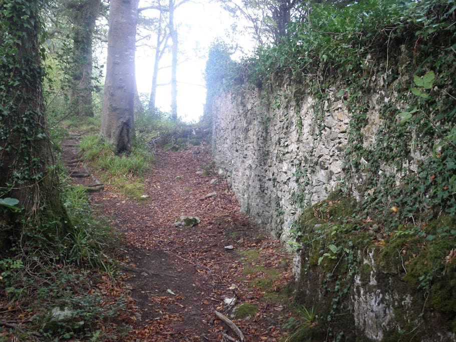 Down by Muckross Abbey. Lovely place to walk