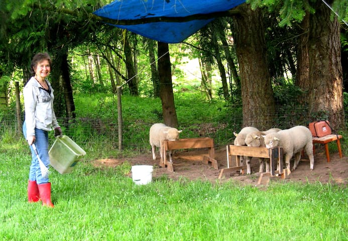 Host and summer lambs