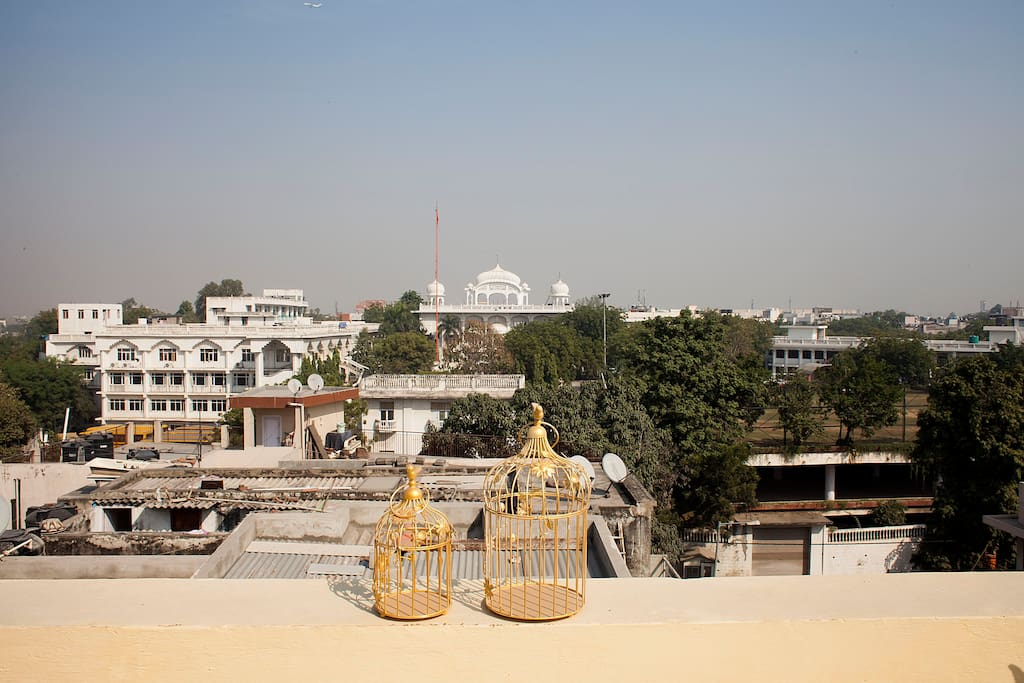 Peaceful rooftop garden overlooking the temple