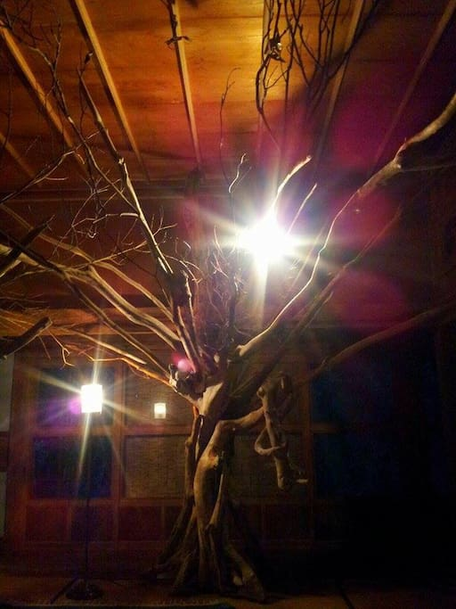 座敷に流木のオブジェ