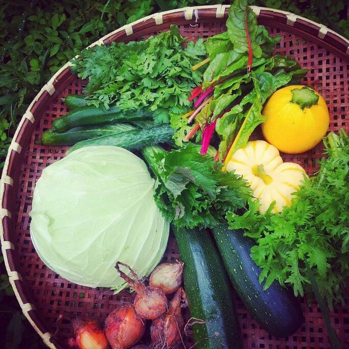 有機栽培している野菜