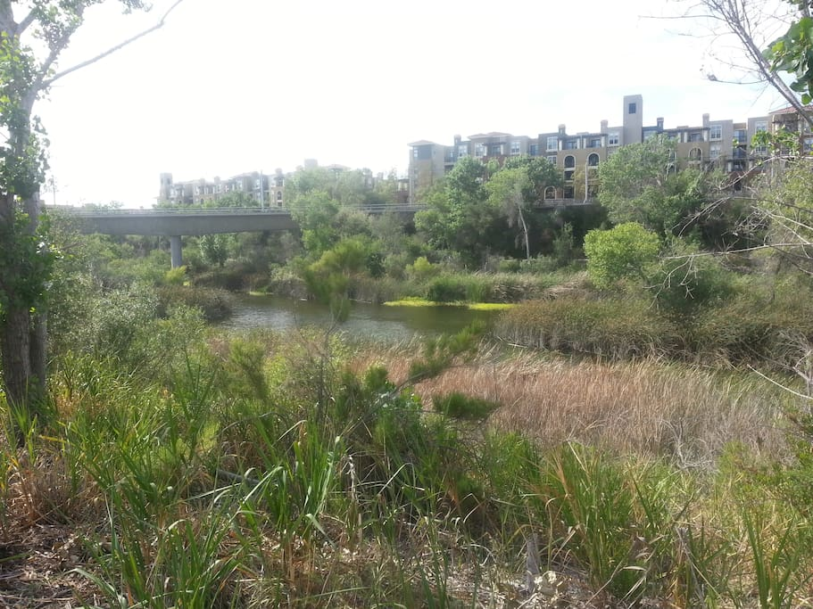 View (from jogging path) of the river & trolley rails across the river