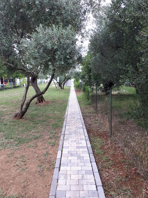 The path from the house to the beach