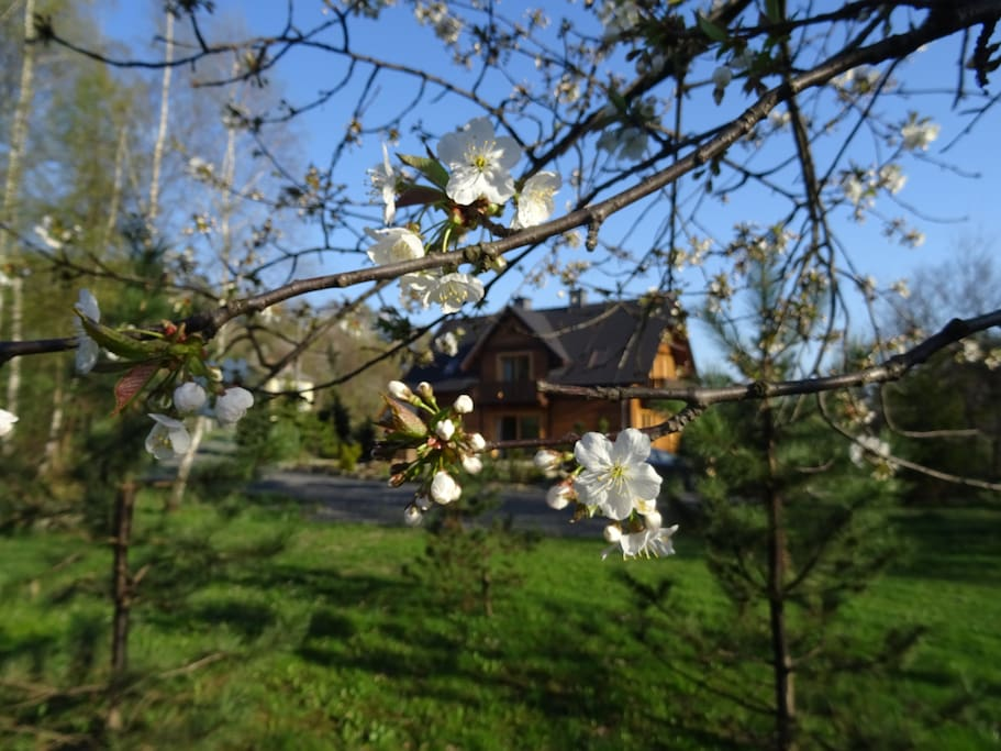 View at the house in the spring from the garden / widok na dom wiosną.
