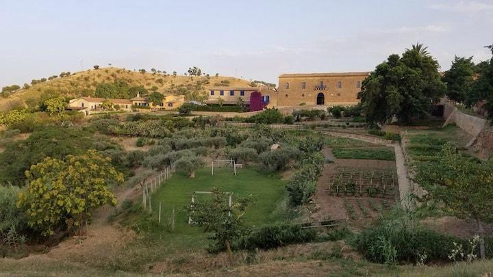 the heart of my vineyards in Regaleali. Green Room