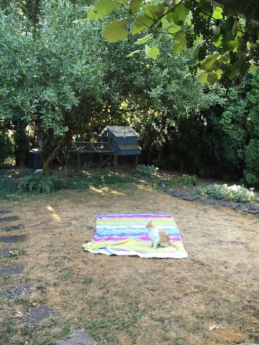 Spend some time under the stars.  Backyard includes large tent with a queen size mattress.