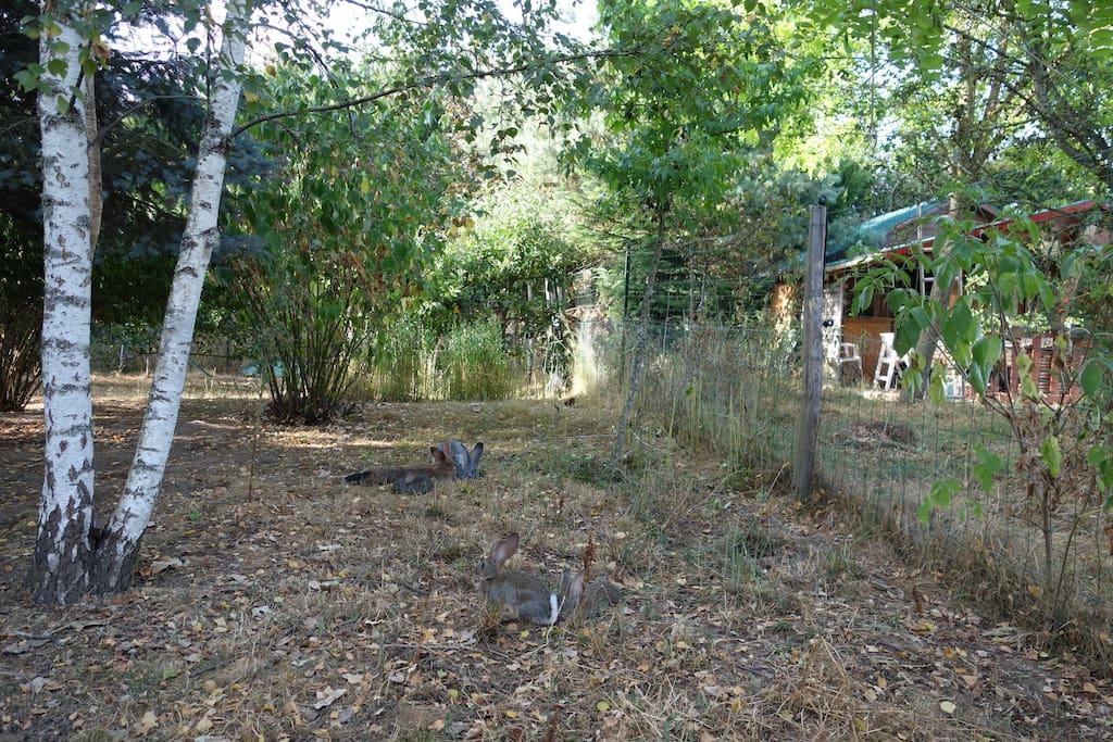 Les lapins , avec les poules.. donc oeufs frais tous les matins