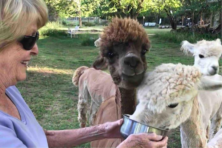 Alpaca and Goat Farmette