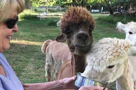 Alpaca and Goat Farmette